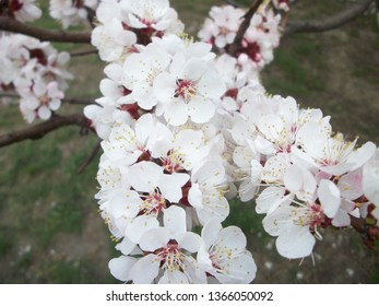 spring flawers  nature