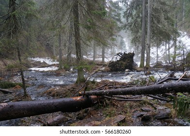 Spring flood in forest Stream
