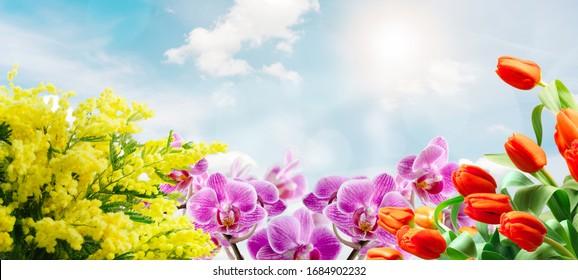 Spring floral arrangement on a sunny sky background - spring concept