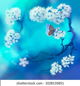 Spring floral background with flowering cherry branch and butterfly on a blue background in nature outdoors, macro. Spring concept, flower frame with free space