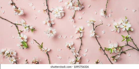 Spring floral background, texture, wallpaper. Flat-lay of white almond blossom flowers and petals over pink background, top view, wide composition. Womens day holiday greeting card