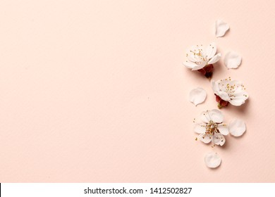 Spring floral background, texture and wallpaper. Flat-lay of white almond blossom flowers and petals over pink background, top view, copy space. Womens day holiday greeting card or wedding invitation