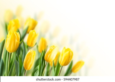 Spring floral background with tulip flowers. Holiday and seasonal design