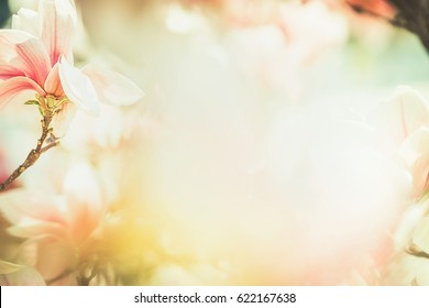 Spring Floral nature background with lovely magnolia blossom , frame, springtime nature, pastel color, soft focus