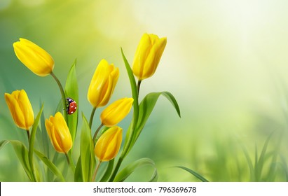 Spring floral template background with free space for text. A beautiful bouquet of yellow flowers tulips with ladybug in nature on meadow close-up of macro in sunlight. Bright colorful artistic image