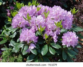 spring florescence