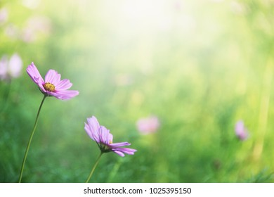Spring flower background selective focus.