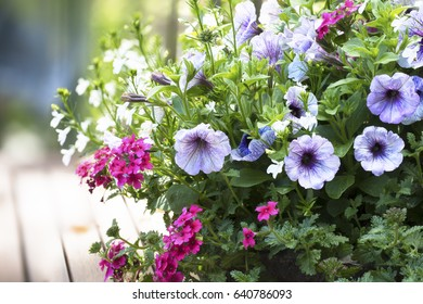 Spring flower basket with variegated purple petunias and pink verbena flowers on outdoor wooden table.