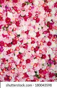 Spring flower bed. Flower texture