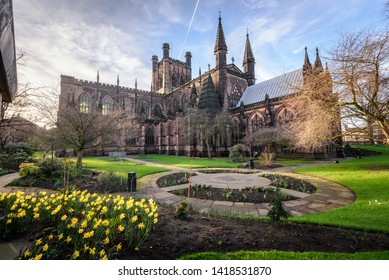Spring flower blooming in the garden of Chester cathedral , Chester city, England.