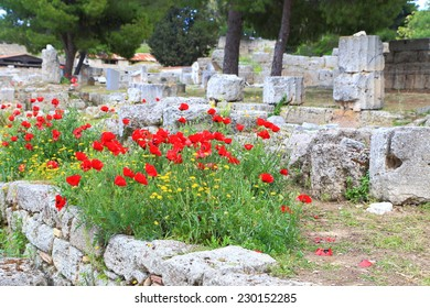 Spring flower bushes cover ancient ruins in Corinth, Greece