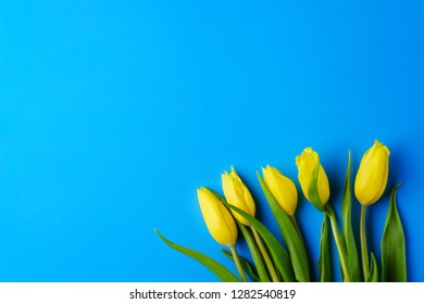 spring flower composition with yellow tulips bouquet on blue background. springtime welcoming, Valentine's day, Mother's day banner template concept