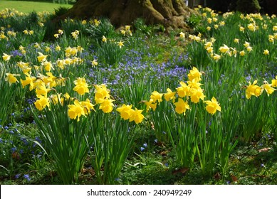 Spring flower garden with daffodils and anemones