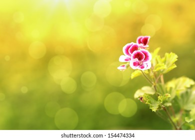 spring flower in garden with shallow focus and space for text