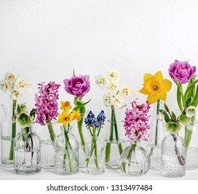 Spring flower in glass vases