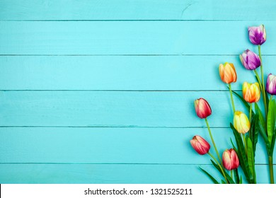 Spring flower of multi color Tulips on wood ,Flat lay image for holiday greeting card for Mother's day,Valentine's day, Woman's day and copy space space for your text.
