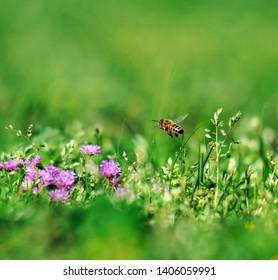 Spring flower nature green aryan