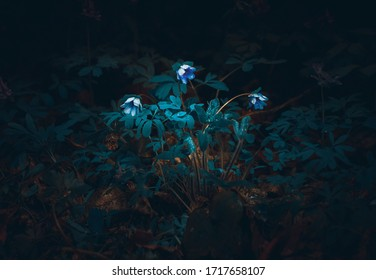 Spring flower in the night forest with raindrops - Shutterstock ID 1717658107