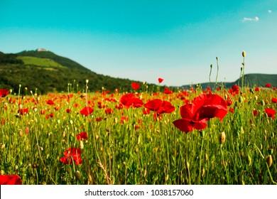 Spring Flower Red Castle