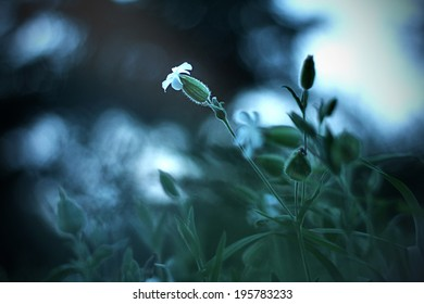 spring flowerin nature - Shutterstock ID 195783233
