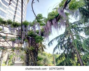 Attalea Speciosa Images Stock Photos Vectors Shutterstock Veja mais ideias sobre palmeiras, palmeira, óleo de coco para acne. https www shutterstock com image photo spring flowering attalea speciosa 1079726993