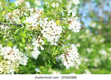 Spring flowering branch outdoors