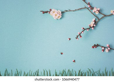 Spring flowering branch of a plum tree and grass on a blue background. View from above.