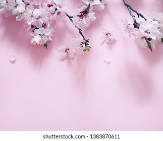 Spring flowering branches on pink background.