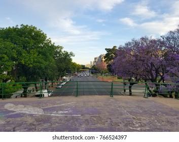 Spring flowering jacaranda in Buenos Aires, Argentina. Highway. During summer