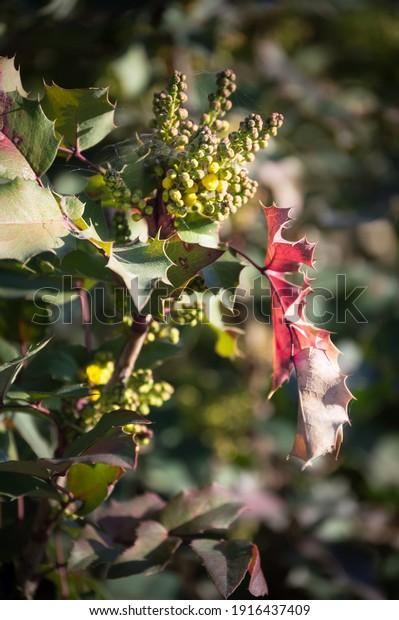 spring-flowering-magone-holm-lat-600w-19