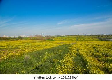 Spring, flowering meadows