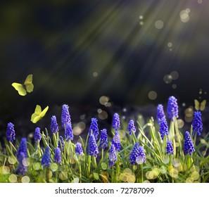 Spring flowering meadows