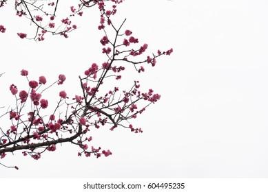фотообои Spring flowers