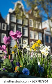 Spring flowers against traditional gabled buildings, Brouwersgracht Amsterdam