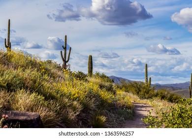 Organ Pipe Cactus Sonoran Desert Plant 3D Postcard  Greeting Card