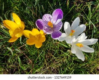 Spring flowers in Amsterdam