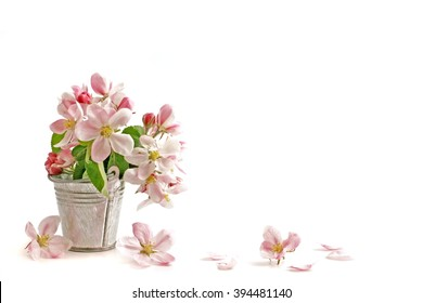 Spring flowers. Apple branch on white background. Card with  copy space. Nature border.