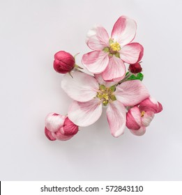 Spring flowers. Apple tree blossom with green leaves on grey background