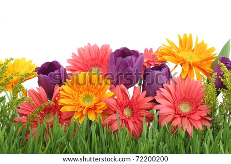 Spring Flowers Background Stockfoto Jetzt Bearbeiten 72200200