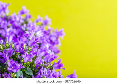 Spring flowers background with copy space, selective focus
