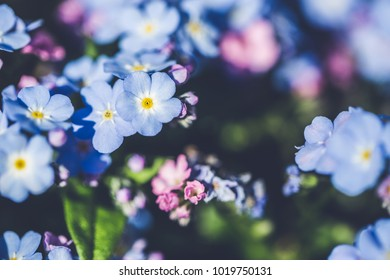 Spring. Flowers background in morning soft light. Nature