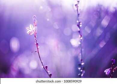 spring flowers background. Nature ptoto with soft warm pink and blue colors. wild meadow beautiful plants in field