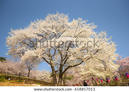 Spring Flowers Background Seoul South Korea Stock Photo Edit Now