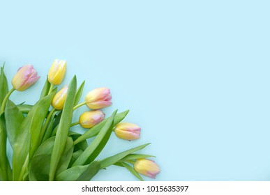 Spring Flowers Banner Bunch Pink Tulip Stock Photo Edit Now