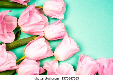 spring flowers banner - bunch of pink tulip flowers on bright colorful background. spring flowers.