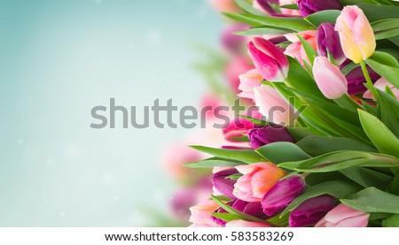 Spring Flowers Banner Bunch Pink Tulip Stockfoto Jetzt Bearbeiten