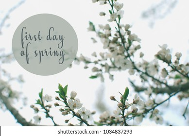 """Spring flowers. Beautifully blossoming tree branch. Text """"First day of spring"""""""
