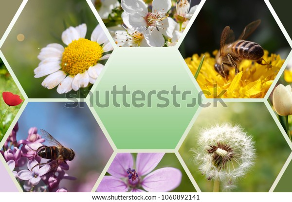 spring flowers and bee theme consisting of photo