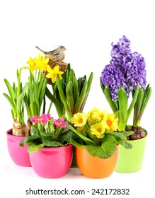 spring flowers with birds nest. colorful easter decoration. hyacinth, pink primulas, yellow daffodils