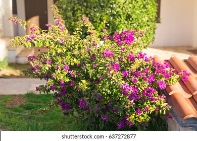Spring, flowers and blooming concept - Beautiful pink flowers. Mediterranean tree.